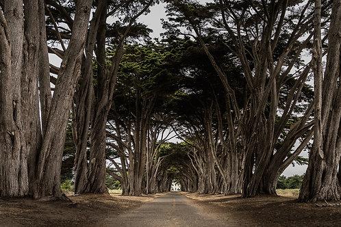 Tunnel Vision | Digital Image