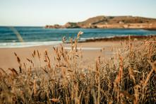 Braye-Bay-grass.jpg