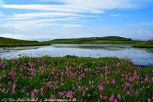 Shetland 10.jpg