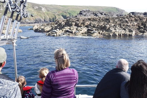 Seal Island St. Ives.jpg