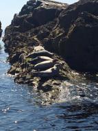 Seal Island.jpeg