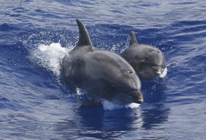 Bottlenose Dolphin_4 - Copy.jpg