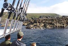 Seal Watchers.jpg