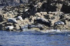 Seal Island Prime Time.jpg