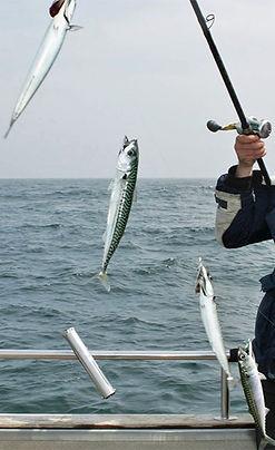 mackerel string st.Ives.jpg