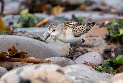 Birds Shetland.jpg