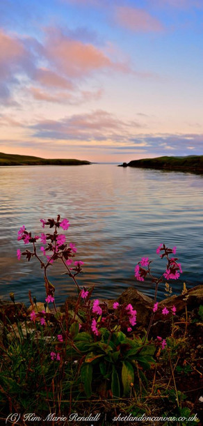 Shetland 39.jpg