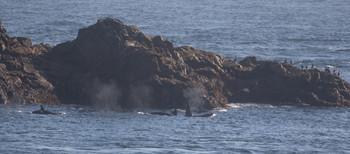 Orca 12 Shetland.jpg