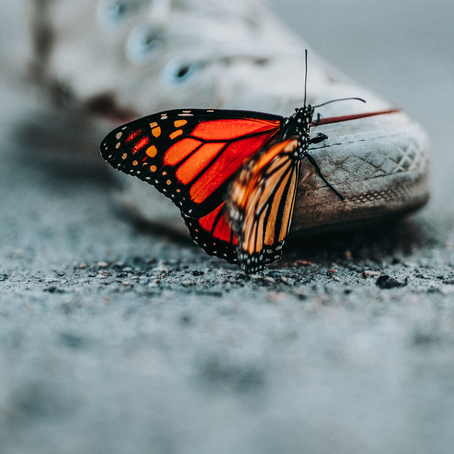 How to become a butterfly - thriving in a VUCA world