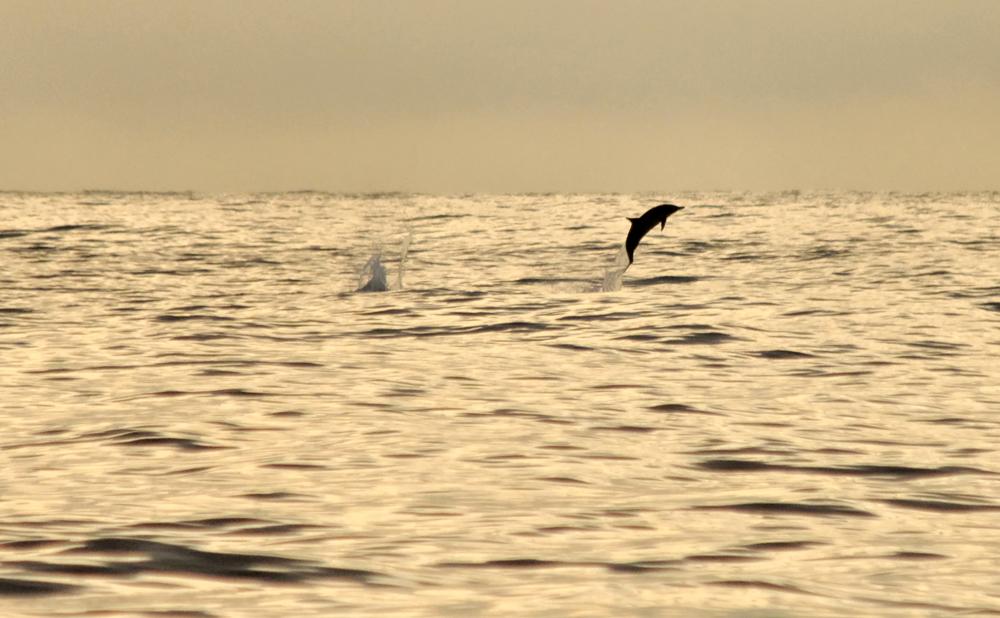 Delfines en el Pacífico