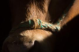 Vache-3664.jpg