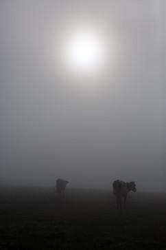Silhouette-6196.jpg