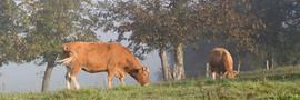 Vache-3870.jpg