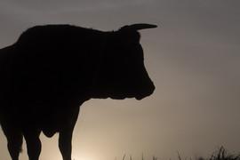 Vache-3830.jpg