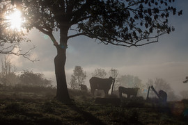 Vache-5598.jpg