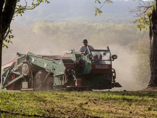Agriculture 5.jpg