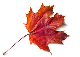 Texture, background, pattern. Autumnal m