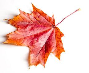 Texture, background, pattern. Autumn map