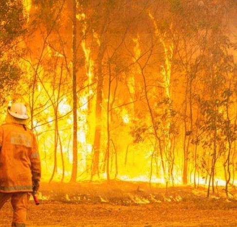 Battling our Bushfires - How to Support