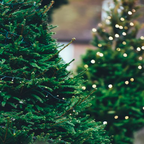 5 ways to have a green christmas