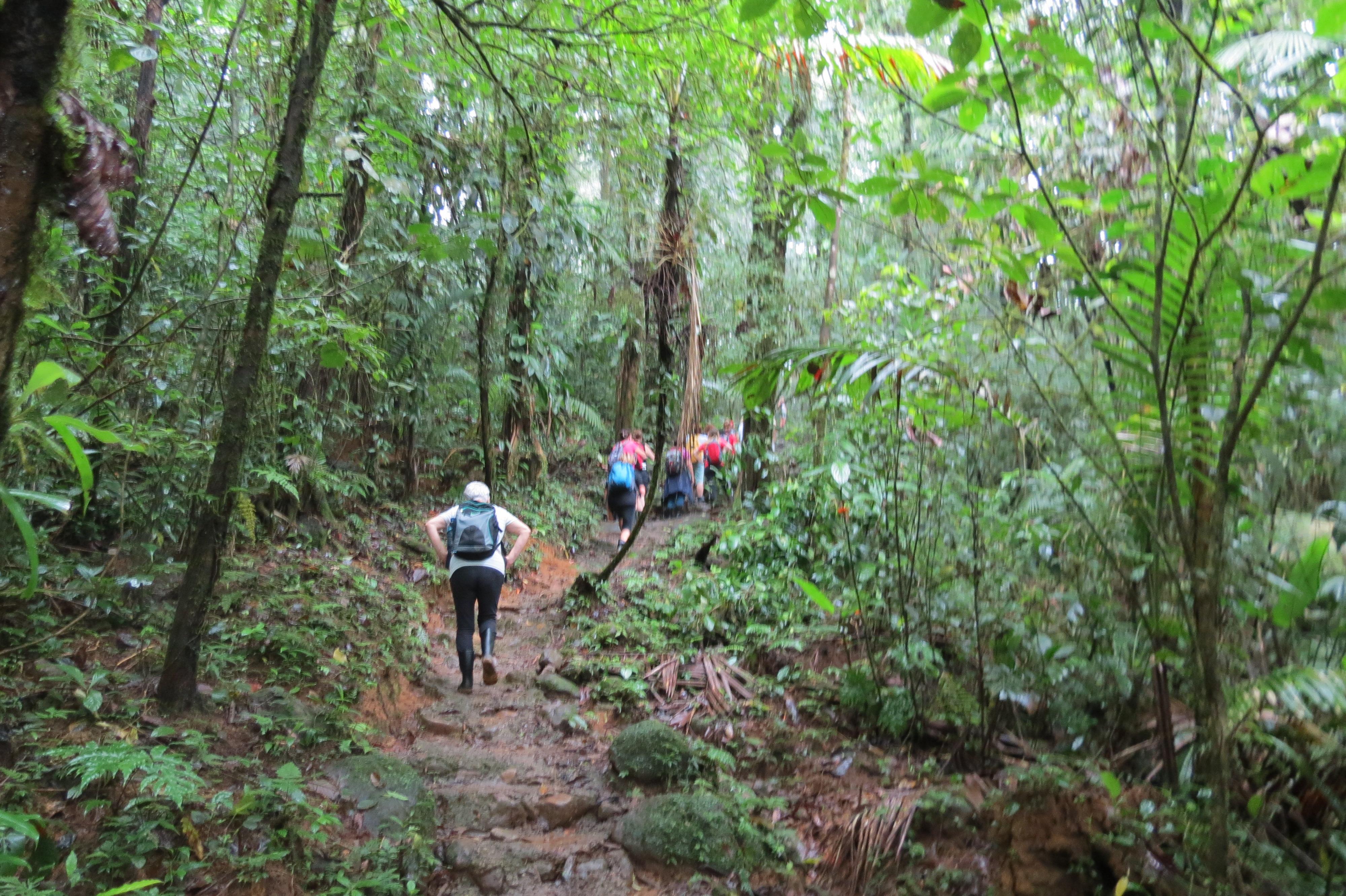 סיור בג'ונגל