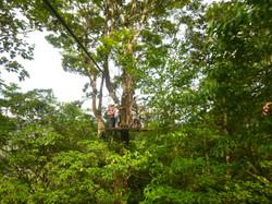 קנופי בג'ונגל