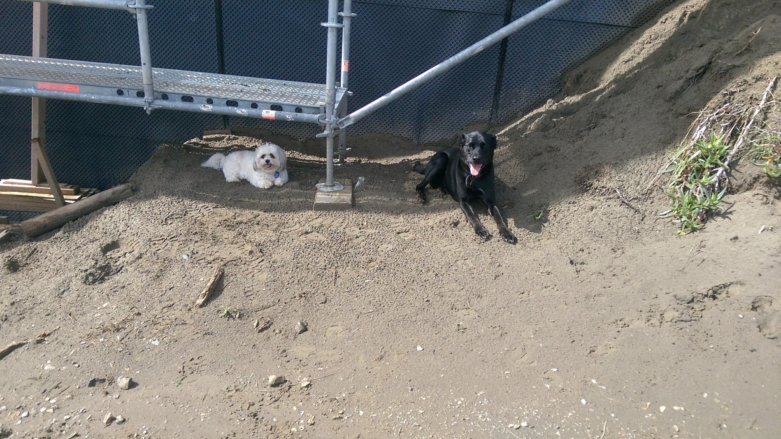Sascha & Bailey
