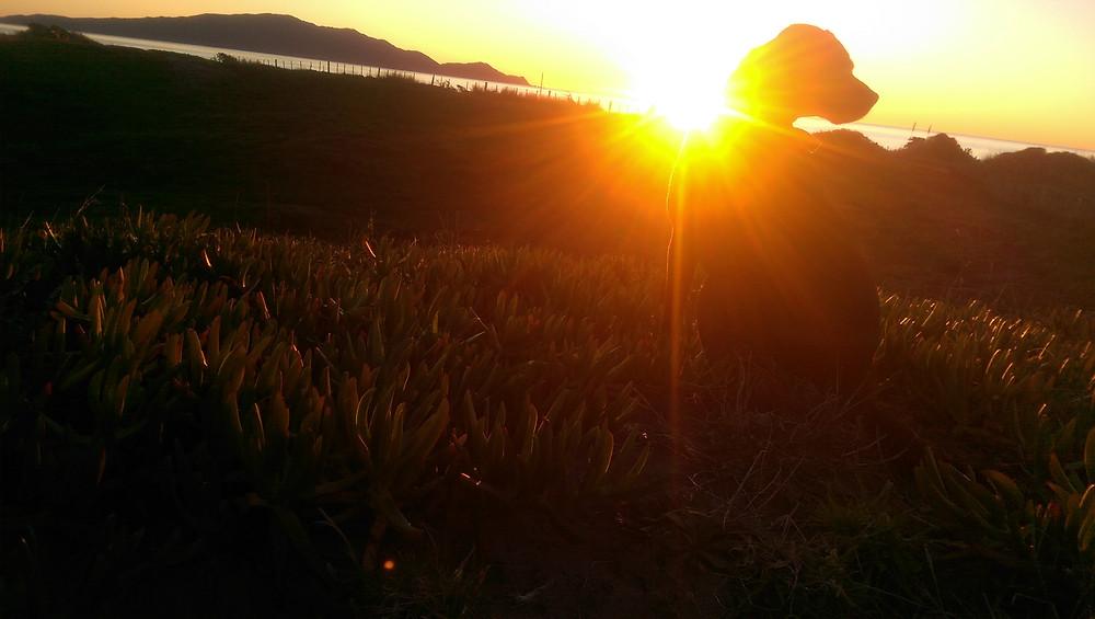 Sascha at sunset