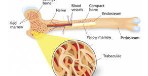 Orthopedic Pearls: Bone- Change Is the Only Constant