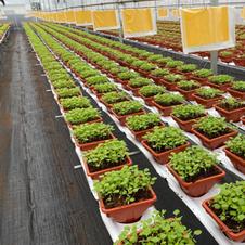 Vegetables Farming