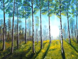 Der Wald erwacht