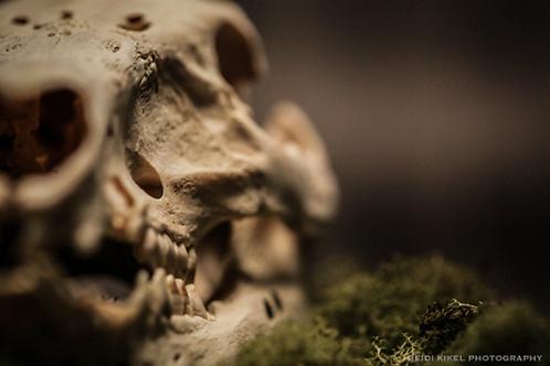 Pig Skull - PRINT
