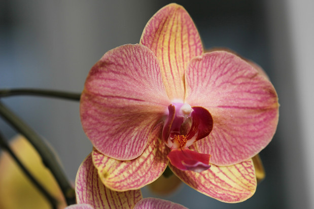 New York Botanical Gardens Orchid Show 2019