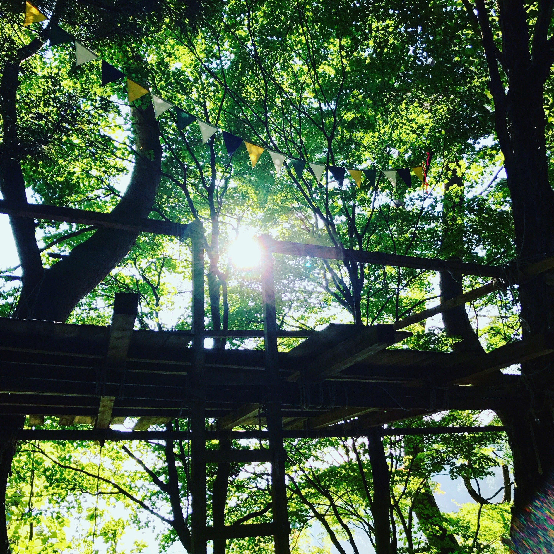 森の隠れ家【ソルファオダスキーゲレンデ】