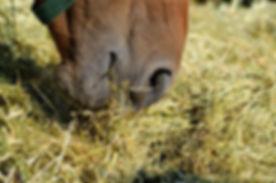 Horse-eating-hay-600x397.jpg