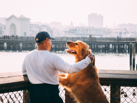 Pilzinfektion bei Hund und Katze - Alles was Ihr zum Thema wissen müsst!