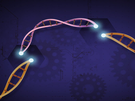 Human Gene Editing: Prevention, Cure, or Enhancement?