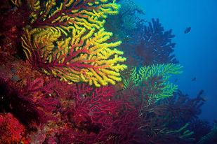coral reef.jpg