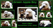 green apple boy 2weeks.JPG