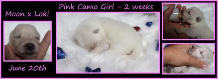 pink camo girl 2wks.JPG