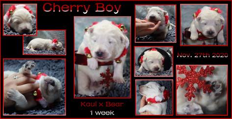 Cherry boy 1week.JPG
