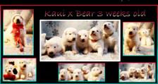 kaui x bear 3 weeks group.JPG