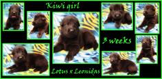 kiwi girl 3 weeks.JPG