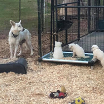 puppies enjoying a kuranda bed