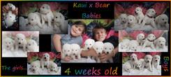 kaui x bear 4 weeks.JPG