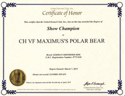 bear champion certifiate