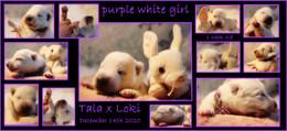 purple white girl 1 week.JPG