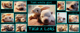 teal white girl 1 week.JPG