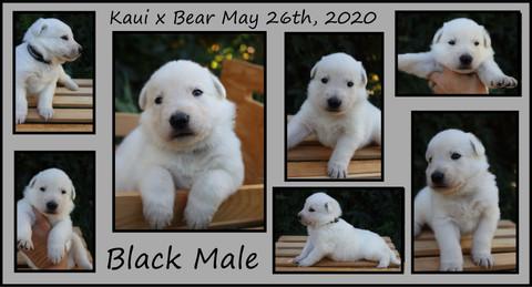 black boy 3 weeks.JPG