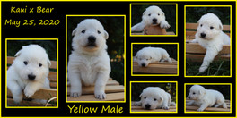 yellow boy 3 weeks.JPG